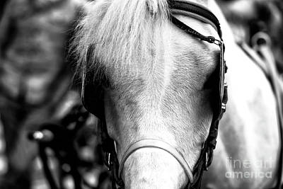 Horse Portrait In Sorrento Print by John Rizzuto