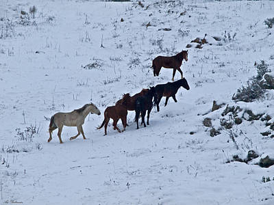 Horses In Snow 2 Print by Arik Baltinester
