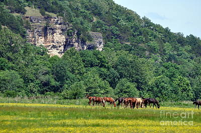 Horses On The Rubideaux Print by Marty Koch