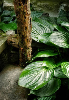 North Carolina Mountains Photograph - Hosta And Steps by Greg and Chrystal Mimbs