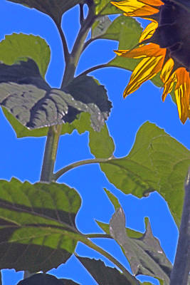 Floral Digital Art - Hot Sunflower by Leslie-Jean Thornton