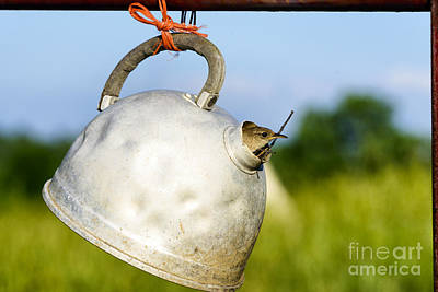 House Wren In Tea Kettle Home Print by Thomas R Fletcher
