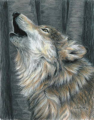 Wolf Drawing - Howling Wolf by Carla Kurt