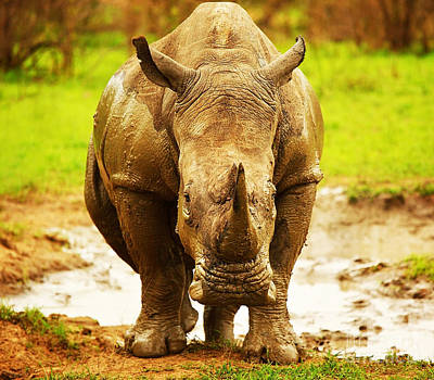Mud Season Photograph - Huge South African Rhino by Anna Omelchenko