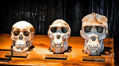 Human Female Male Gorilla Skulls Print by Gary Keesler