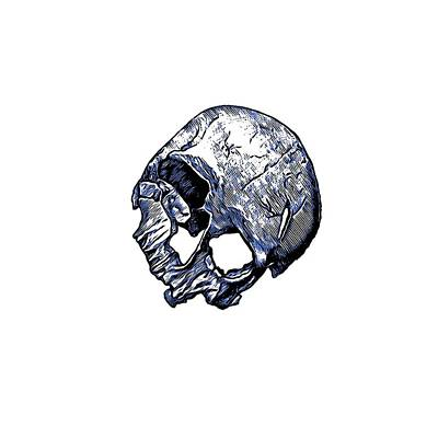 Human Skull Print by Tracey Harrington-Simpson