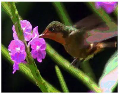 Humming Bird Sucking On Pink Purple Flowers Print by Navin Joshi