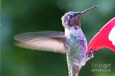 Photograph - Hummingbird - 12 by Mary Deal