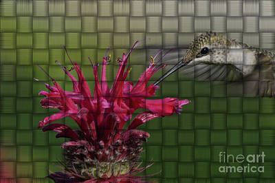 Photograph - Hummingbird And Bee Balm Woven Effect by Robert E Alter Reflections of Infinity