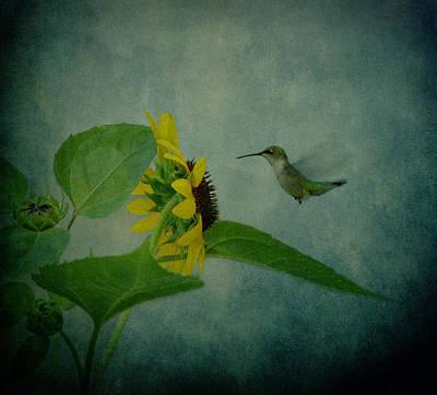 Hummingbird And Sunflower Print by Sandy Keeton