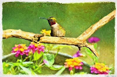 Hummingbird Attitude - Digital Paint  Print by Debbie Portwood