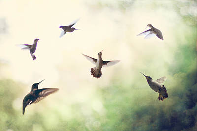 Flock Of Bird Photograph - Hummingbird Dance by Amy Tyler