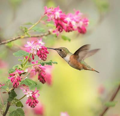 Hummingbird Heaven 2 Print by Angie Vogel