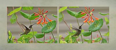 Hummingbird In Afternoon Print by Sandy Keeton