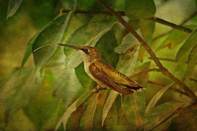 Hummingbird On Branch Print by Sandy Keeton