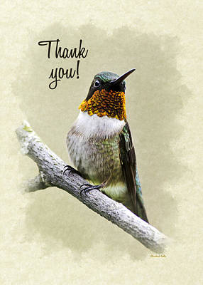 Bird Photograph - Hummingbird Portrait Thank You Card by Christina Rollo