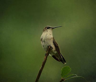 Hummingbird Watching Print by Sandy Keeton