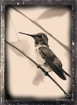 Cute Bird Digital Art - Hummingbird With Old-fashioned Frame 3 by Carol Groenen