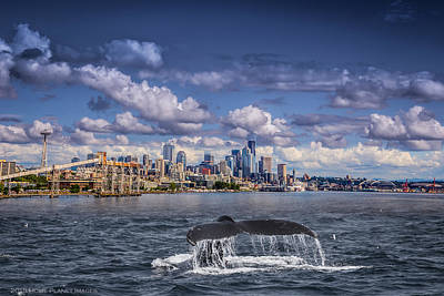 Humpback Whale Photograph - Humpback Whale-seattle by Janis Knight
