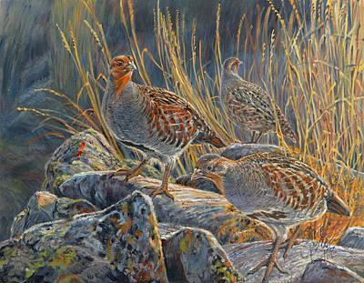 Partridge Painting - Hungarian Partridges by Steve Spencer