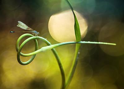 Macro Dragonfly Photograph - Hunter's Rest by Jaroslaw Blaminsky