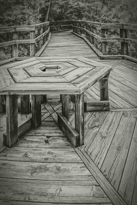 Fern Photograph - Huron County Nature Center Board Walk by LeeAnn McLaneGoetz McLaneGoetzStudioLLCcom