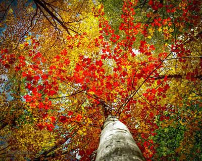 Boardwalk Photograph - Huron County Nature Center Colors Above by LeeAnn McLaneGoetz McLaneGoetzStudioLLCcom