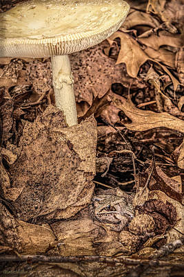 Toad Photograph - Huron County Nature Center by LeeAnn McLaneGoetz McLaneGoetzStudioLLCcom