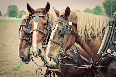 Belgian Draft Horse Photograph - Hurry Up And Wait by Forever West Photography - Dianna Radermacher
