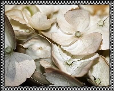 Photograph - Hydrangea Blossom 2 Framed by Andrea Lazar