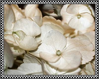 Photograph - Hydrangea Blossom Framed by Andrea Lazar