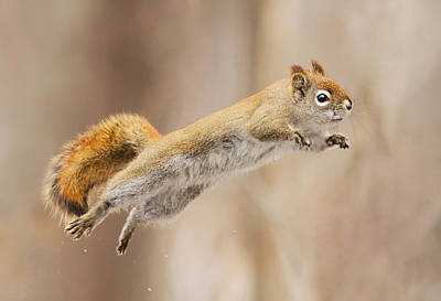 Humour Photograph - I Can Fly! by Mircea Costina