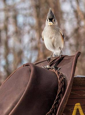 Cowboy Hat Photograph - I Gots Me A Peanut by Pat Eisenberger