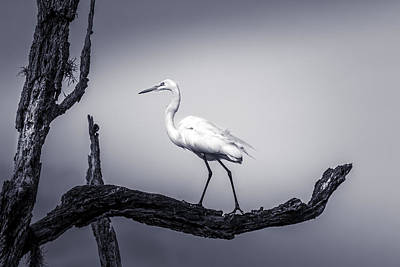 Heron Photograph - I Live Here by Marvin Spates