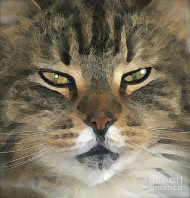 Of Cats Photograph - I Miss Him Sometimes ... by Gwyn Newcombe