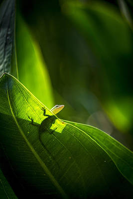 Lizard Photograph - I See Green by Marvin Spates