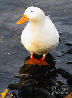 Life Is Beautiful Photograph - I Wish That I Had Duck Feet by Colleen Kammerer
