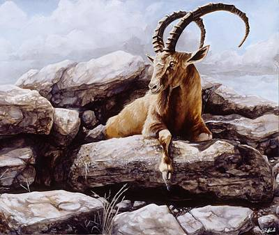 Mountain Goat Painting - Ibex by Steve Goad