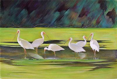 Ibis Drawing - Ibis In Midstream by Anthony Leto
