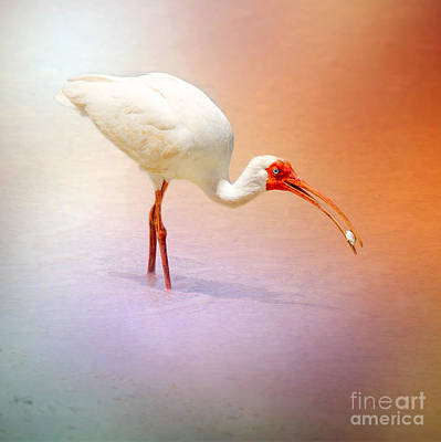 Water Photograph - Ibis In Orange by J Darrell Hutto