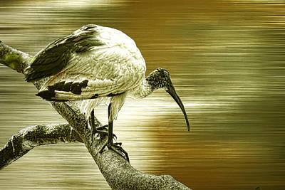 Stork Digital Art - Ibis by Sharon Lisa Clarke