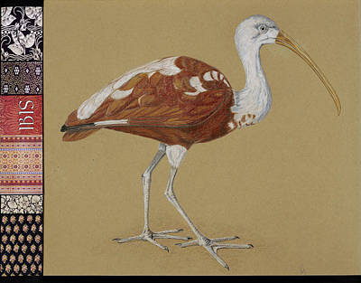 Ibis Mixed Media - Ibis by Susan Jecminek