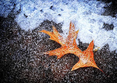 Ice Coated Oak Leaf Print by Carolyn Derstine