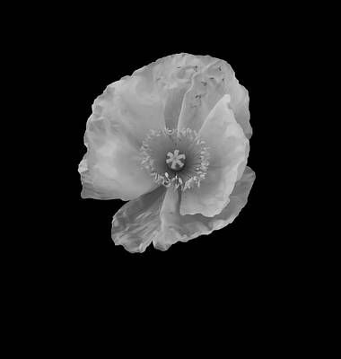 Abstract Flower Photograph - Ice Translucent Poppy by Heather Joyce Morrill