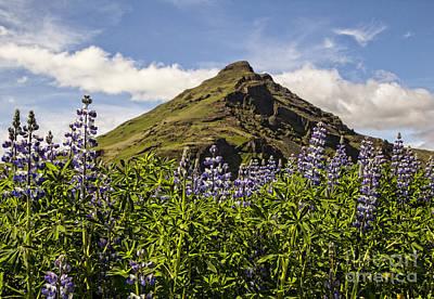 Landscape Photograph - Icelandic Lupines by Alison Gunn