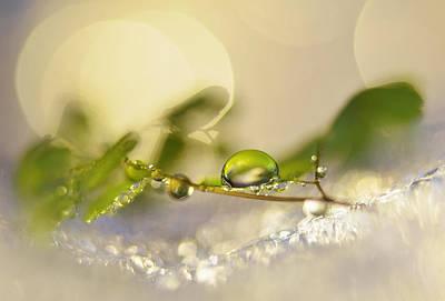 Icy Green Print by Heidi Westum