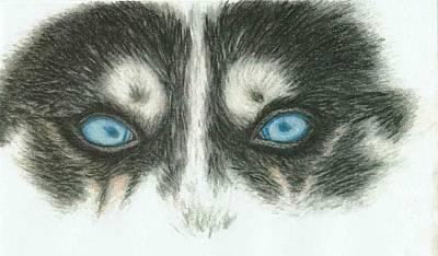 Siberian Husky Drawing - Icy Stare by Ahyoka