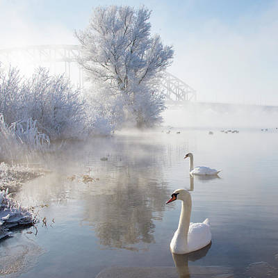 Swimming Photograph - Icy Swan Lake by E.M. van Nuil