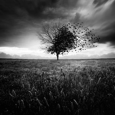 Autumn Photograph - Illusion D'un Printemps Perdu by Sebastien Del Grosso