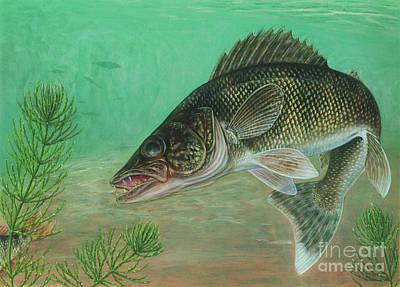 Pickerel Digital Art - Illustration Of A Walleye Swimming by Carlyn Iverson